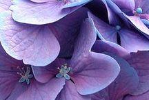 Purple/lavender/Violet / Color-Purples