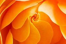 Orange / Color-Orange
