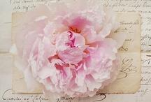 Peonies / My fav flower! / by Jeanine Bauman