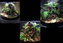 Beautiful Live Tanks / These are all tanks we've set up with our own animals and plants. Take a look, get inspired... or let us do the work! WE're available to design any tank... big or small!