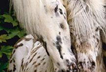 Unusual and rare animals / Cute but unusual animals. Cute and rare animals.