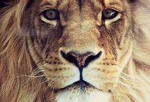 Animalistic ❤️