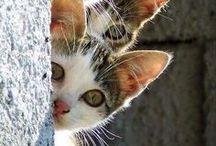 stylecat