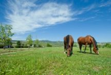 Equine Science News
