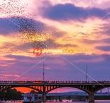 Congress Avenue Bat Bridge / The Congress Avenue Bridge or Ann W. Richards congress avenue bridgespans Town Lake in downtown Austin and is home to the largest urban bat colony in North America. The colony is estimated at 1.5 million Mexican free-tail bats. Each night from mid-March to November, the bats emerge from under the bridge at dusk to blanket the sky as they head out to forage for food. This event has become one of the most spectacular and unusual tourist attractions in Texas.