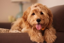 Fluffy Puppy / Doesn't matter who you are.  You gotta love a fluffy puppy.