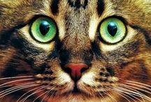 But cats ❤️ / Doğa benimle..