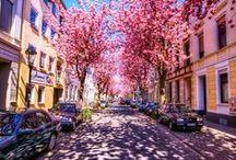 Street view / .