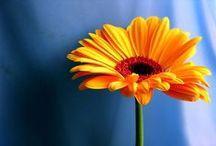Flowers / whatcomflowers.net