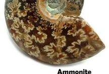 Fossils / Fossils are the petrified remains of plants or animals that died away millions of years ago that, over time, have turned into stones. Minerals, such as Quartz, Agate, Jasper, etc. often mix with sediment that result in a Fossil. Amber, Jet, Petrified Wood, Sand dollars, and Ammonites are some examples of Fossils.  http://www.healingcrystals.com/advanced_search_result.php?dropdown=Search+Products...&keywords=Fossil