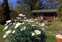 Puutarha / Kauralammille pihalla ja puutarhassa. Tänä keväänä, kun ei kerta kaikkiaan laiteta mitään.