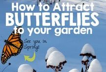 Bringin' the Butterflies / Ways to attract butterflies to your outdoor environment