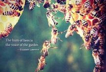 Bzzzz / All about bees!