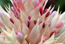 不思議で美しい植物たち