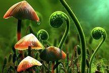 Nature Flora Fauna