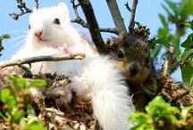 Squirrels are funny people! / I get a kick out of squirrels / by Sherry Heater