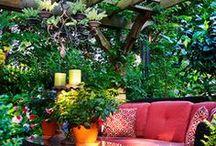 Gardening / Yard dreams