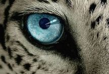 Leopardi - Giaguari - Pantere - Puma