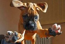Dogs we love! / The cutest dogs out there!