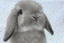 Rabbits We Love!