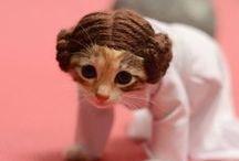 funny cats n cuteness kittens