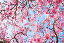 PINK Delicious / OMG! LOVE Pink so much. My eye is always instantly attracted to things PINK. Dedicated to eveything PINK!!