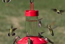 Inviting Hummingbirds / Plants that attract hummingbirds - information on hummingbirds