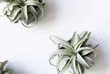 IDEAS | Plants