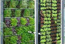 Home - Green and garden