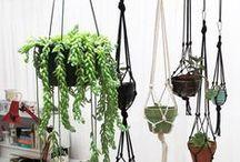 Boho Botanical