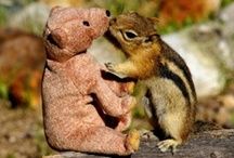 adventures of squirrel and bear / friend squirrel and friend bear explore the world!
