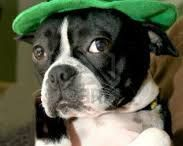 Festive Pets / Costumes and activities for dogs and cats for every holiday.