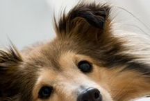 Dog Cost Saving Tips / Cost saving dog products and dog DIY projects for paralyzed handicapped dogs.