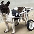 DIY Dog Wheelchairs / Dog wheelchairs you can make at home. Cat wheelchairs too.