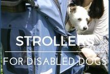 Dog Strollers / Strollers for handicapped dogs | pet strollers | strollers for disabled dogs | strollers for paralyzed dogs