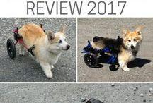 Dog Wheelchair Brands