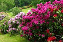 My Garden / Сад, кустарники, цветочки