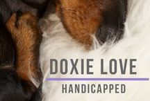 Doxie Love Handicapped Dachshunds