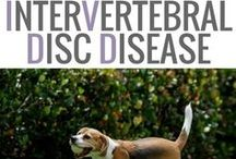 IVDD Dogs | IVDD Dog Wheelchairs | IVDD Dog Products / IVDD dogs | IVDD dog wheelchairs | IVDD dog products