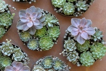 Bridal Flowers / Bouquets, button holes, wedding arrangements