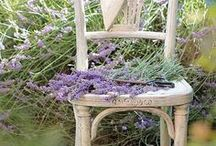 PLANT LOVE\\Lavender fields