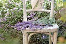 PLANT LOVE\\Lavender fields