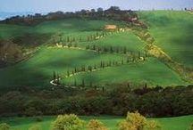 PLANT LOVE\\Cypress wonder