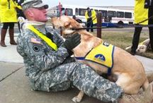 Canine Companions for Independence / Service dogs in training- yellow cape  Service dogs placed- blue capes