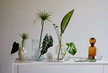 MAMITA | MOOD / mood, botanical skincare, organic, botanical, beauty, green, nature, cosmética natural, nature,