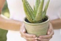GARDEN\\Know how for Mediterranean plants