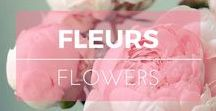 Fleurs ※ Flowers