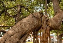 Amazing Trees / Trees