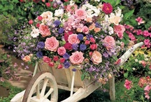 Flowers and Beautiful Gardens