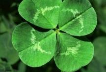 The luck of the Irish / by Helen Runk